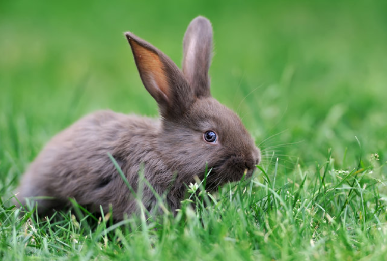 How to take good care of rabbits, to be healthy and avoid stress